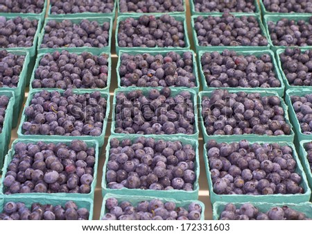 Fresh Picked Blueberries in Baskets lined in Rows in a Farmers Market.  Grown in Corbett, Oregon, United States - stock photo