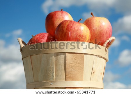fresh picked red apples in a wooden basked againts a blue sky background outside in the autumn sun - stock photo