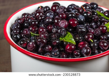 Fresh picked wild huckleberries in a vintage white pot - stock photo