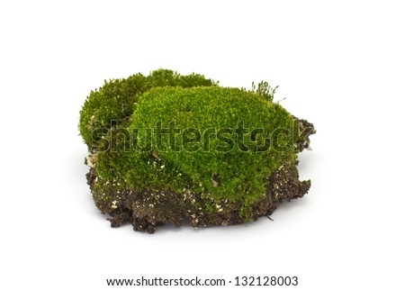 Fresh piece of  moss isolated on white background - stock photo