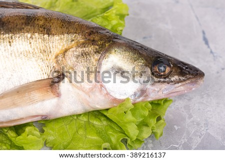 Fresh pike perch on the green lettuce leaves over table-top background - stock photo