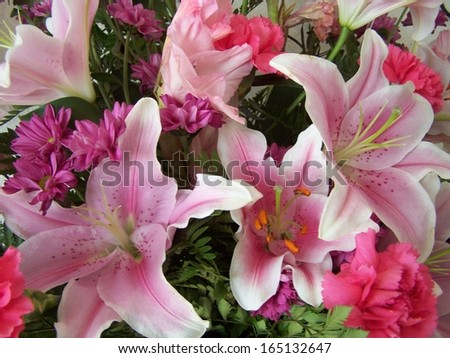 Fresh pink lilies and flowers - stock photo