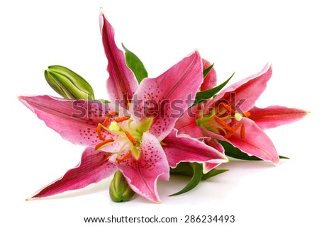 fresh pink lily flower isolated on white - stock photo