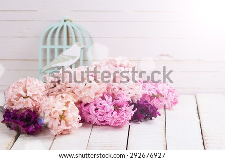 Fresh pink,  purple hyacinths  in ray of light on white wooden planks against white wall. Selective focus. Place for text. - stock photo