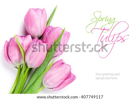 Fresh pink tulip flowers bouquet. Isolated on white background with copy space - stock photo