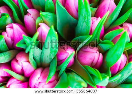 Fresh pink tulips with green leaves- nature spring background. Soft focus and bokeh - stock photo