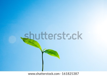 Fresh plant leaves with water drops against sky - stock photo