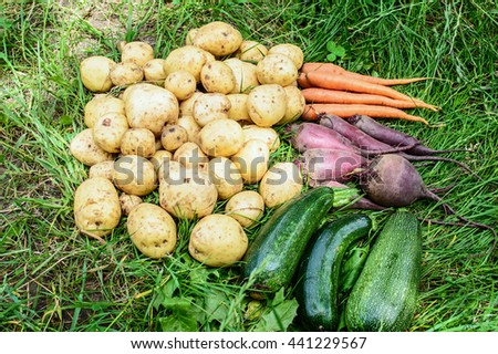 Fresh potatoes, carrots, beet and vegetable marrows zucchini on a green grass - stock photo