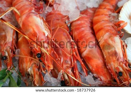 Fresh prawn lay on an ice - stock photo