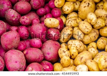 Fresh purple and yellow potatoes - stock photo