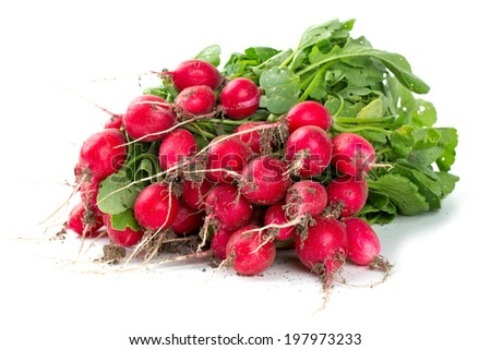 fresh radish isolated on white - stock photo