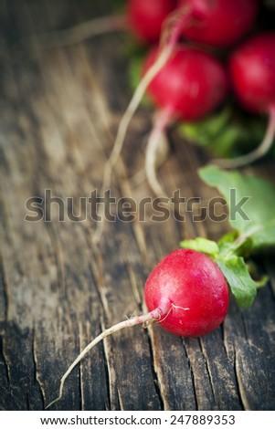 Fresh radish. Shallow depth of field - stock photo