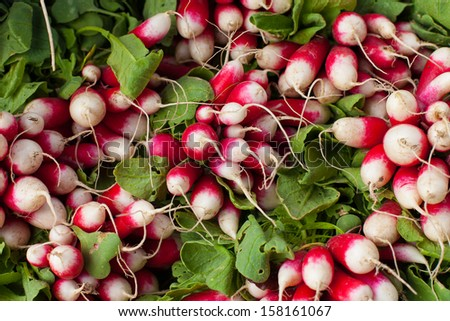 Fresh Radishes at Farmers market - stock photo