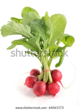 Fresh radishes isolated on white background. - stock photo
