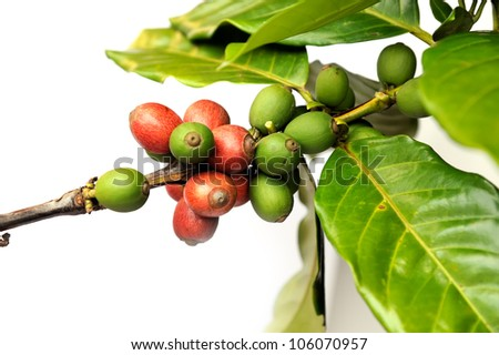 Fresh raw coffee beans isolated on white background, selective focus. - stock photo