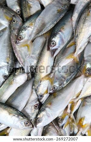 Fresh raw mackerel fish in market. - stock photo