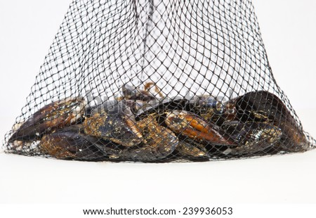 Fresh raw mussels on their net. Isolated on a white background - stock photo