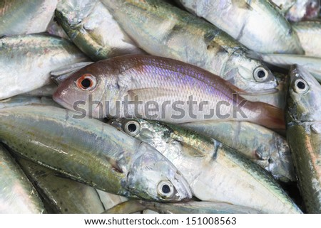 Fresh raw red snapper and mackerel fish in market - stock photo
