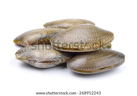Fresh raw Surf clam on a white background - stock photo