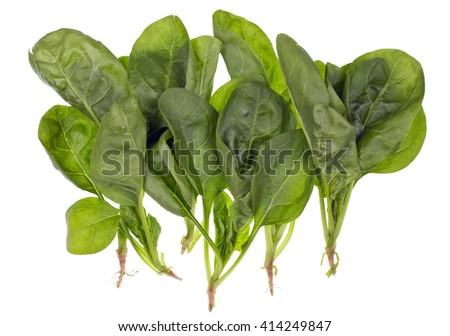 Fresh real green pure spinach with roots just from a spring vegetable bed. Isolated on white - stock photo