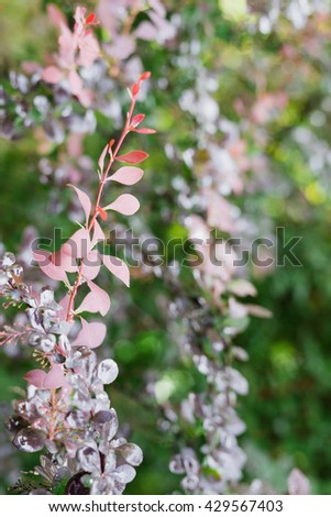 Fresh red and purple tree leaves with dew drops closeup. Nature Background - stock photo