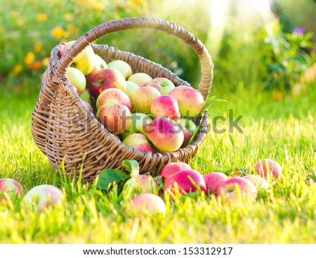 Fresh red apples in straw basket on green grass in garden. - stock photo