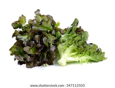 fresh red lettuce leaves isolated on white - stock photo