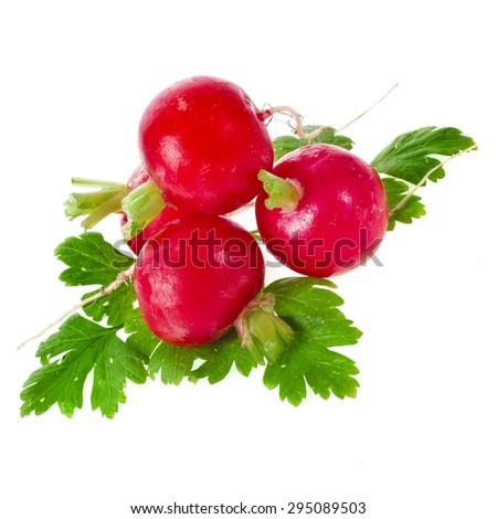 Fresh red radish isolated on white background - stock photo