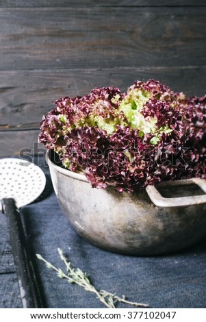 Fresh red salad lettuce leaves isolated on a background on a black textile and metal plate on a dark background of the aged wooden boards vintage vertical - stock photo