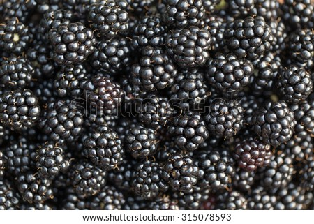 Fresh ripe blackberries. Food background. - stock photo