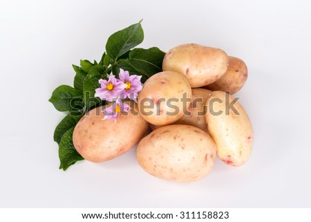 fresh ripe potatoes and flower isolated on white background. View from above. - stock photo