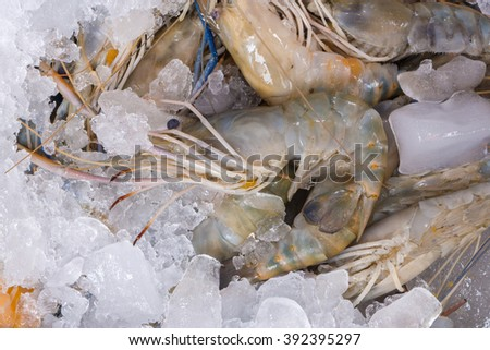 fresh river prawn from the market. (fresh shrimp / seafood)  - stock photo
