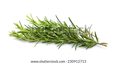 fresh rosemary sprigs isolated on white background - stock photo