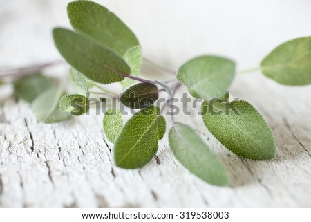 Fresh Sage - stock photo