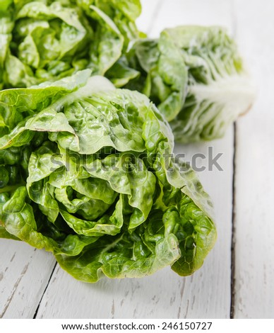 Fresh salad heads on the table - stock photo