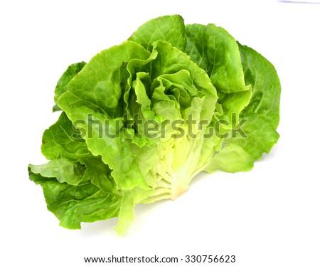 Fresh salad lettuce isolated on white - stock photo