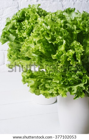 Fresh salad lettuce leaves on a background of white brick wall vertical isolated closeup - stock photo