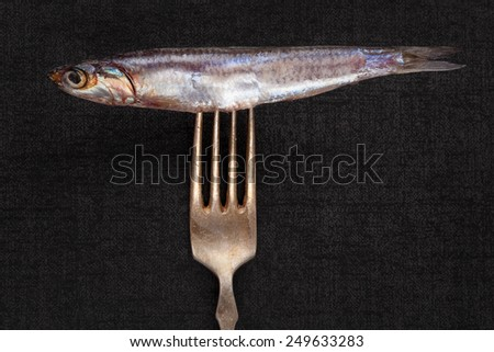 Fresh sardine fish on silver fork isolated on black background. Culinary seafood eating. Fish on fork.  - stock photo
