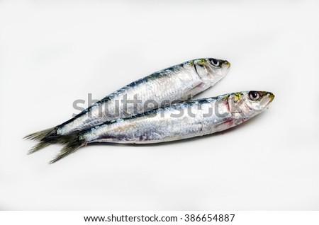 Fresh sardines - stock photo