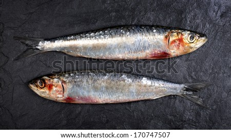 Fresh sardines on black slate background. - stock photo
