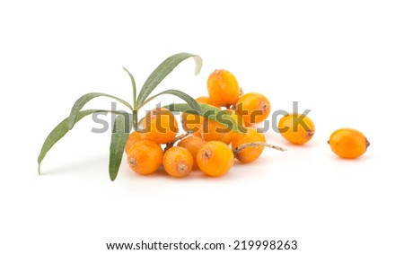 Fresh sea buckthorn isolated on the white background - stock photo