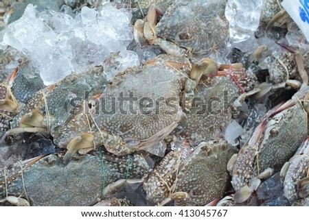 Fresh sea crab for cooking in market - stock photo