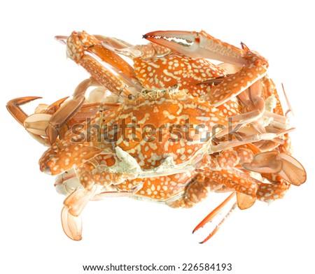 Fresh sea crabs, hot steam on white background. - stock photo
