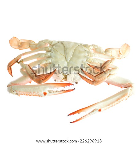 Fresh sea crabs, hot steam on white backgroung. - stock photo