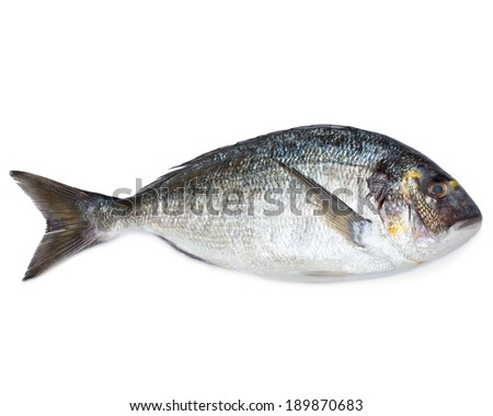 Fresh sea fish gilt-head bream isolated on white  - stock photo