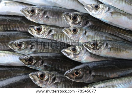 Fresh sea fish horse mackerel background - stock photo