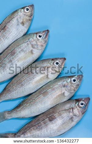 Fresh Seabasses  on blue background - stock photo