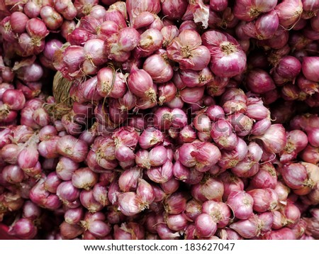 Fresh Shallot - stock photo