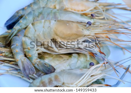 fresh shrimp from the farm for cooking. - stock photo
