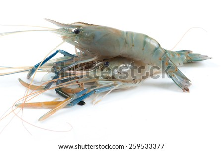 fresh shrimp from the farm for cooking on white background - stock photo